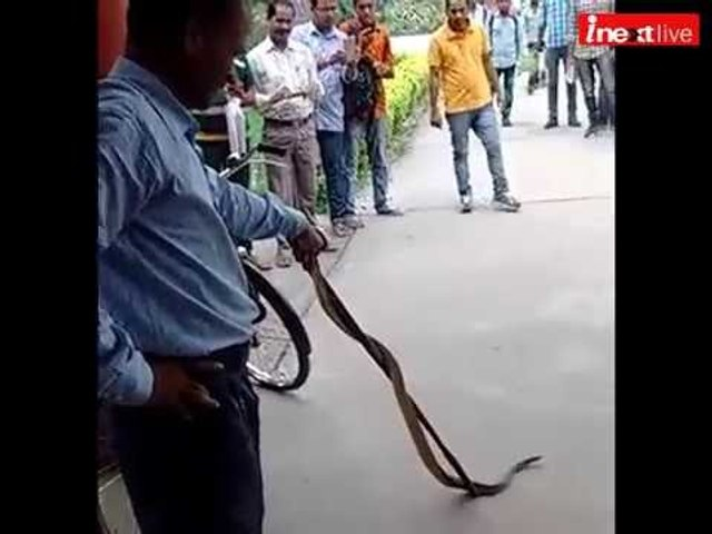 Watch Allahabad University professor catch six feet snake in central library