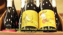 Coq au Vin | Rendez-vous à Paris