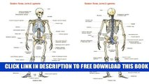 Collection Book Skeleton: Bones, Joints And Ligaments Chart