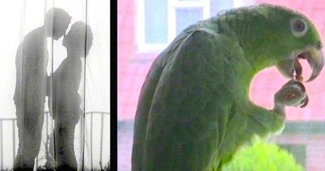 Papagaj otkrio prevaru