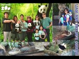 Giant Panda Snakes Crocodile and other Reptiles at San Diego Zoo (part 3) | Liam and Taylor's Corner