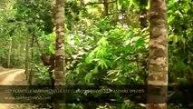 Beautiful Bangladesh Lawachara Rain Forest Srimangal Sylhet Video