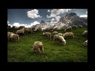 Venhar SAĞIROĞLU İle Her Telden Ebruli - Çoban Hesabı
