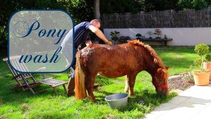Pony wash