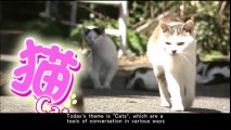 COOL JAPAN~発掘!かっこいいニッポン~ cat猫 Japanese programm with English subtitle 0515