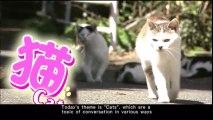COOL JAPAN~発掘!かっこいいニッポン~ cat猫 Japanese programm with English subtitle 0515