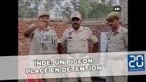 Un pigeon qui transportait une lettre de menaces placé en détention