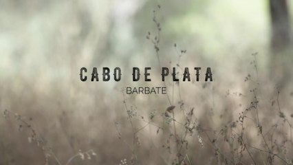 Cabo de Plata 2016 - Vídeo Oficial