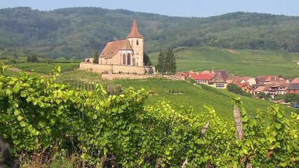 Alsace Land of Wines