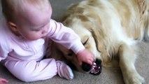 Ce bébé met les mains dans la bouche du chien mais pas d'inquiétude ce chien est le plus gentil du monde