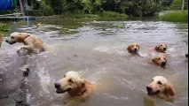 Swim Swim. Let's Swim!!!!