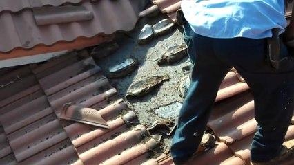 Cet homme a découvert un nid géant de chauve souris sous une toiture à Miami
