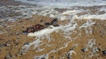 Il fait croire aux internautes qu'il a trouvé le corps d'une sirène sur le bord d'une plage