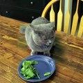 Die Reaktion dieser schuldigen Katze bringt dich in nur 13 Sekunden zum Lachen!