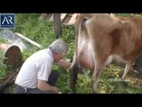 The Latest Milking Machine Amazing Video | AR Entertainments