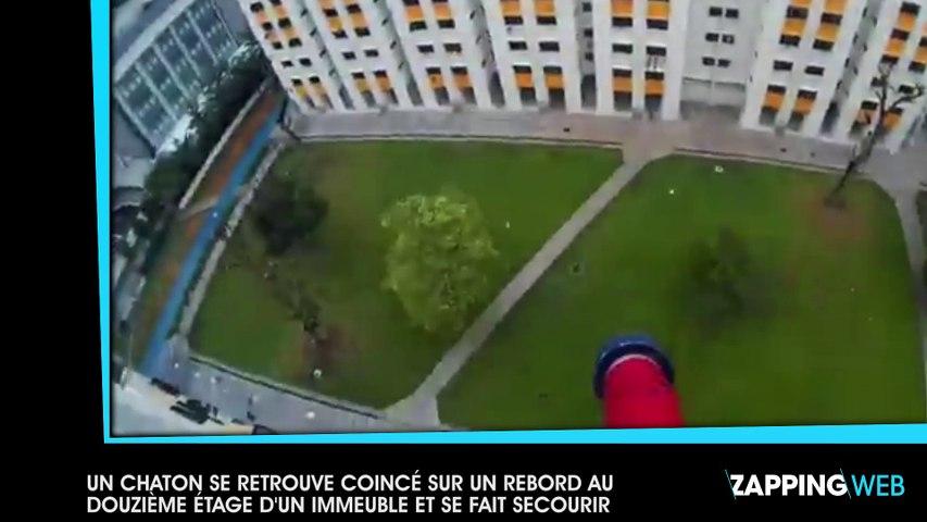 Un chaton se retrouve coincé sur un rebord au 12ème étage d'un immeuble et se fait secourir (vidéo)