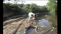 Most Amazing Giant Anacondal Attacks - Giant Anaconda vs Dog, Pitbull, Giant Anaconda Attacks – Buena
