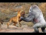 Most Amazing Wild Animal Fights - Lion vs Hyena, Crocodile,Rabbit,Goat - Funny Animals Attacks