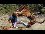 Lion Eating boy in Zoo Live Very Horrible Scene - video