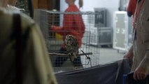 Mary  Jane 'Owl Gore for President, 2016' Official Promo MTV