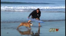 Tillman the Skateboarding Bulldog Skates, Skimboards, and SURFS!!