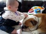 Baby Bites Bulldog