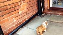 9 Funniest Bulldog Videos [NEW]