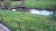Square des Batignolles : la rivière !