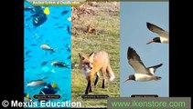 Classification of Living Organism - Five Kingdom System - fun learn
