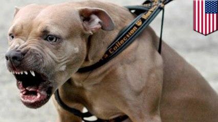 Des policiers new-yorkais abattent un chien violent