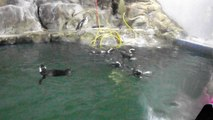 pinguins aquario de paranagua2