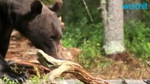 Hiker Attacked By Bear