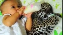 Bébé boit son lait, mais lorsqu'il se tourne vers son copain... je ne sais pas comment ils ont réussi à filmer cette scè
