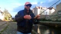 pêche des ablettes dan le sichon a vichy 2 eme catégorie