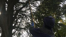 Sa mission : combattre les nids de frelons asiatiques