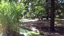 Zoo Opole Hippo