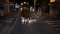 Croiser une famille de sangliers en allant au taf en ville lol