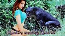 AMAZING Monkey Meeting tourist Amazing Monkey Meeting with Visitor Wow Monkey Meeting and Meeting#30