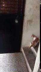 Kapı Çalan Kedi