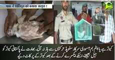Indian police clips wings of Pakistani 'spy pigeon' to stop it flying back to Pakistan