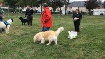 Education canine dans le quartier nord de Lisieux
