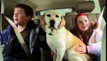The Dog Who Saved Christmas Vacation | Trailer (2010) | Mario Lopez, Paris Hilton, Dean Cain