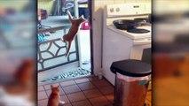 Compil de chats vraiment LOL !!! Fails, gamelles et trucs droles