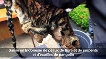 Indonésie: saisie de peau de tigre et d'écailles de pangolin