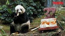 Hong Kong: le plus vieux panda du monde en captivité est mort