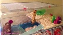 Sharon funny ANIMAL FAILS  FUNNY PET Fails Compilation [Funny Pets]