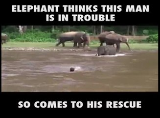 Elephant Goest To Rescue A Man