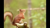 drole d'ecureuil