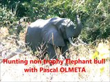 Pascal Olmeta en pleine polémique pour avoir tué un éléphant !