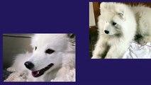 Funny Dog Videos #Funny Dog Videos 2016 #Dog Compilation #Funny Dog Fails Funny Dog Videos